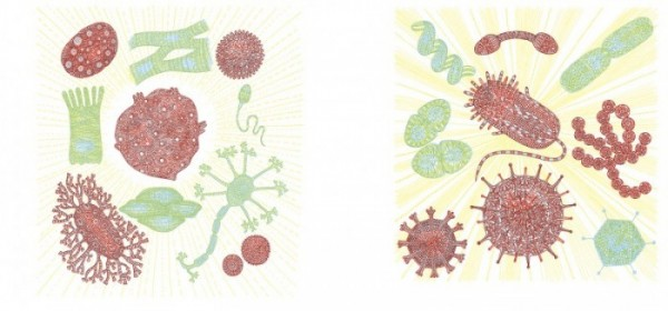 10.WHATS HIDDEN BODY cells abd bacterium